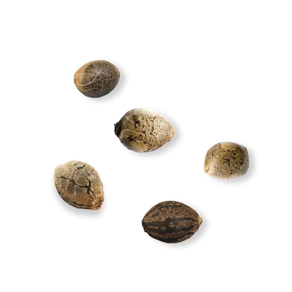 5 Seeds