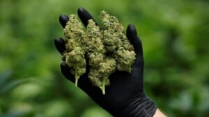 get Autoflowering Marijuana Seeds