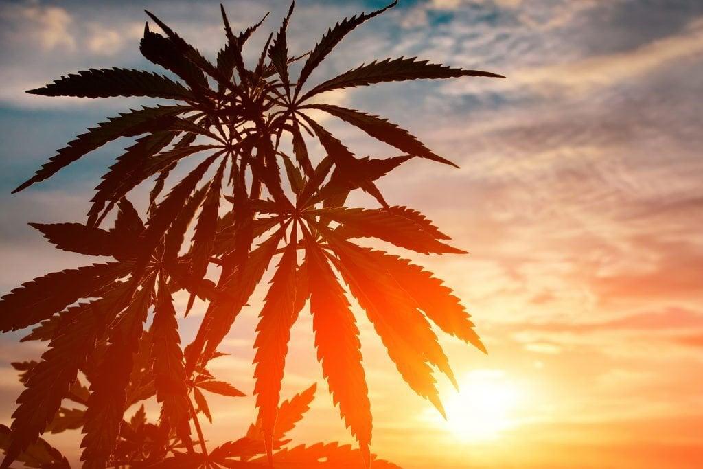 buy best marijuana seeds in california