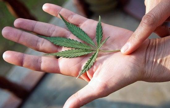 buy marijuana seeds pacific seed bank