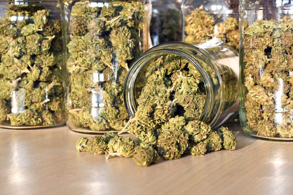 Marijuana strains with good yields