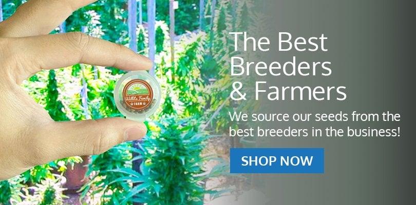 PSB-marijuana-seeds-alaska-pack1