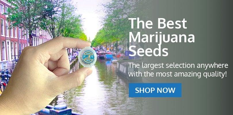 PSB-marijuana-seeds-alaska-pack2