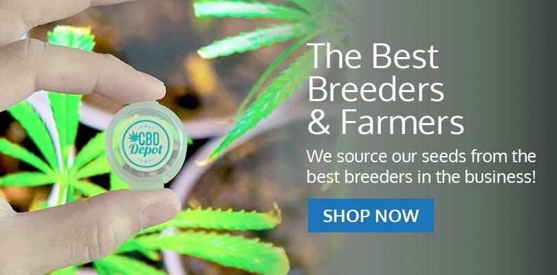 PSB-marijuana-seeds-hawaii-pack2