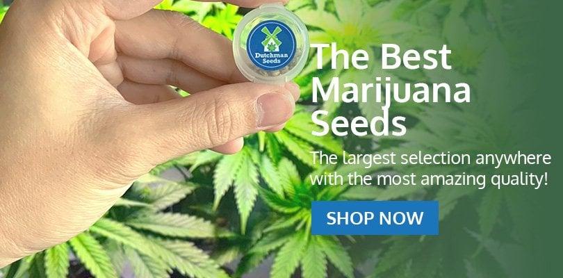 PSB-marijuana-seeds-indiana-pack1