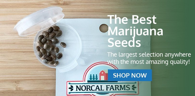 PSB-marijuana-seeds-iowa-pack2