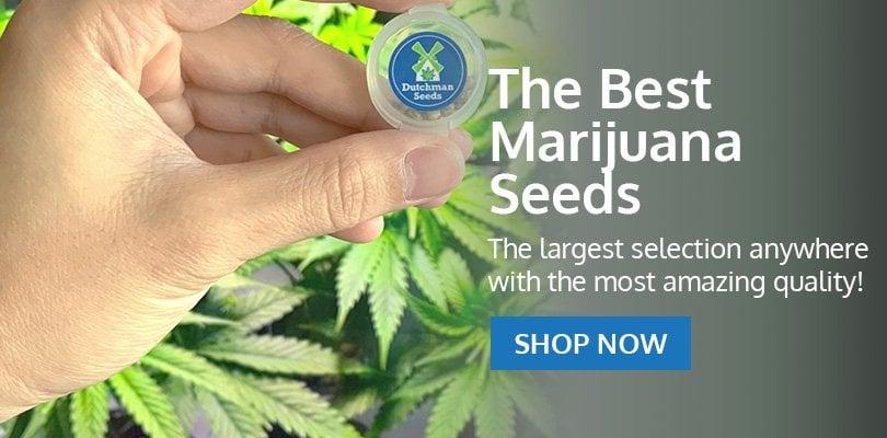 Buy Marijuana Seeds in Michigan - Pacific Seed Bank