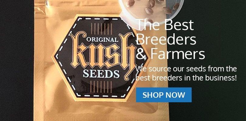 PSB-marijuana-seeds-minnesota-pack1