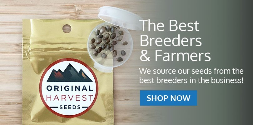 PSB-marijuana-seeds-nevada-pack1