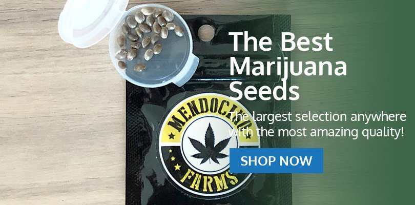PSB-marijuana-seeds-virginia-pack2