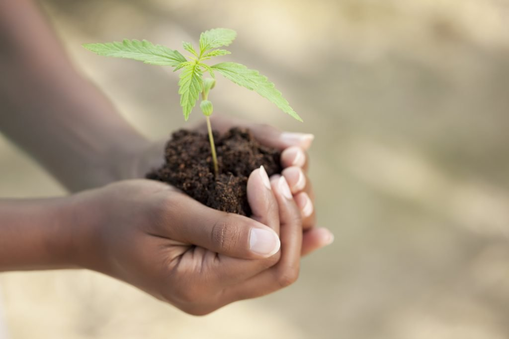 easiest to grow marijuana plants