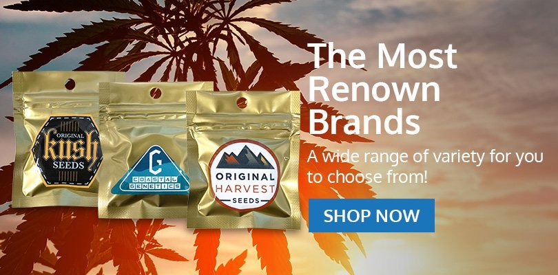oregon-marijuana-seeds-bk