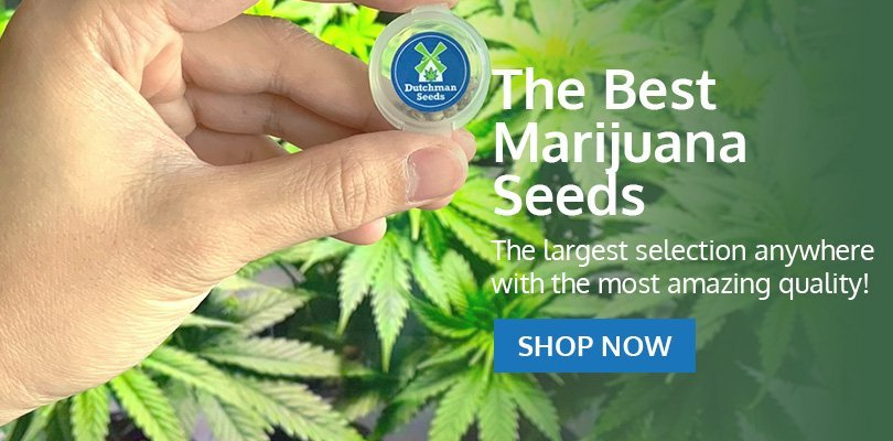 Buy Marijuana Seeds in Oregon - Pacific Seed Bank