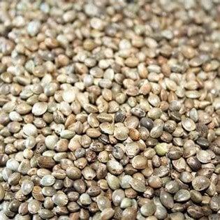 Death Star Autoflowering Marijuana Seeds - Pacific Seed Bank