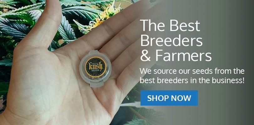 PSB-marijuana-seeds-alberta-pack2