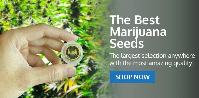 PSB-marijuana-seeds-british-columbia-pack2