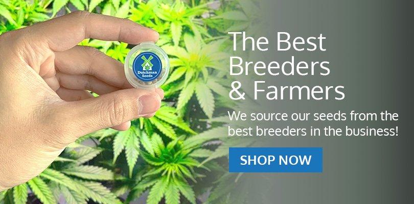 PSB-marijuana-seeds-manitoba-pack2