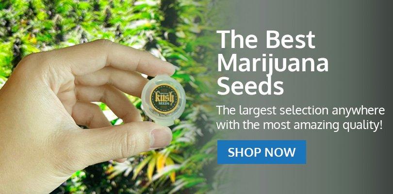 Buy Marijuana Seeds in Oklahoma - Pacific Seed Bank