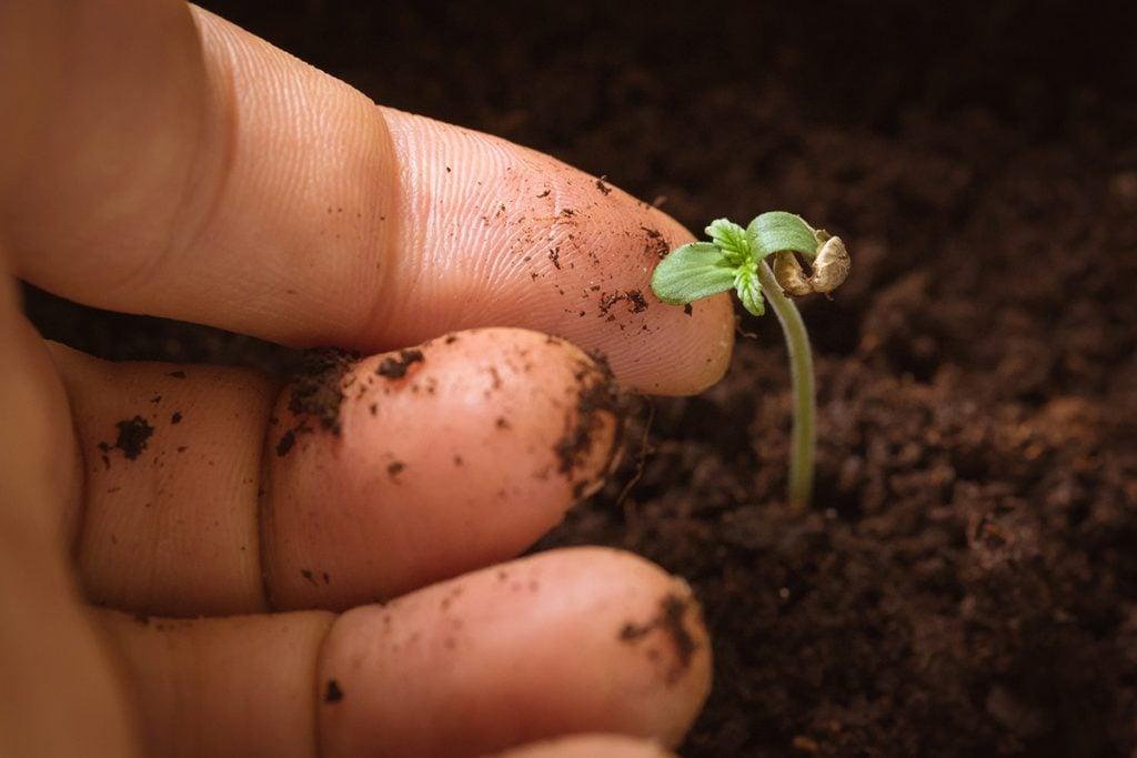 buy-cannabis-seeds-columbus