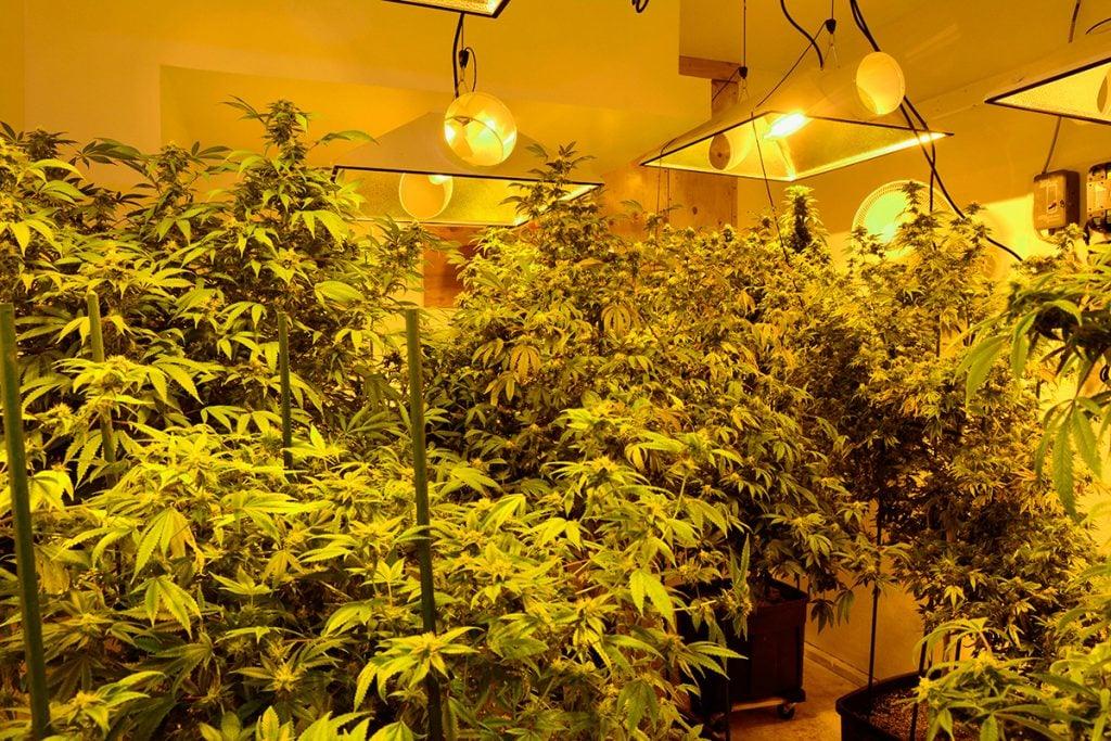 buy-cannabis-seeds-in-juneau