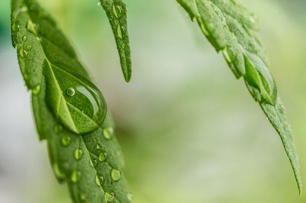 buy-cannabis-seeds-in-nunavut