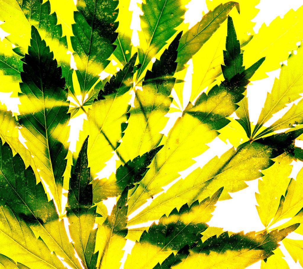 buy-cannabis-seeds-in-ohio