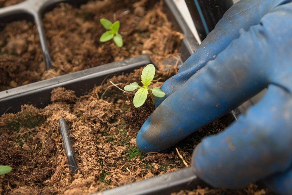 buy-marijuana-seeds-columbus