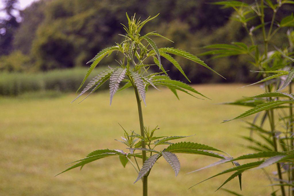 buy-marijuana-seeds-in-northwest-territories2