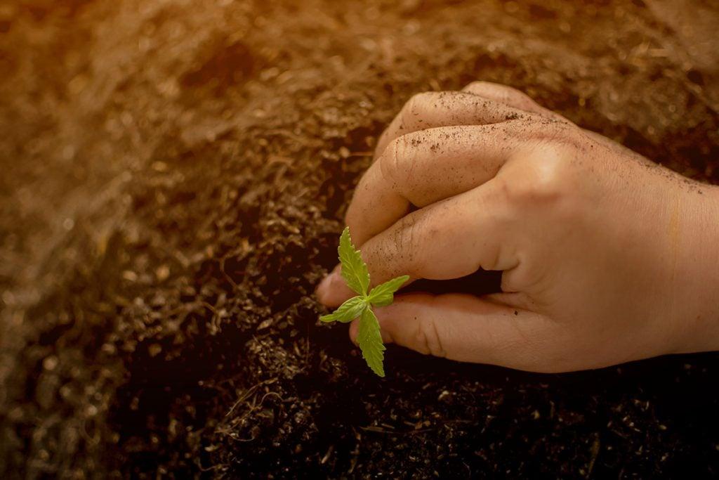 buy-marijuana-seeds-in-oklahoma