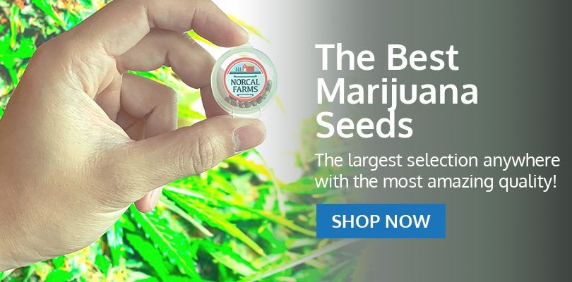 PSB-marijuana-seeds-fall-river-2