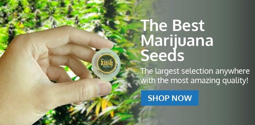 PSB-marijuana-seeds-gaithersburg-1