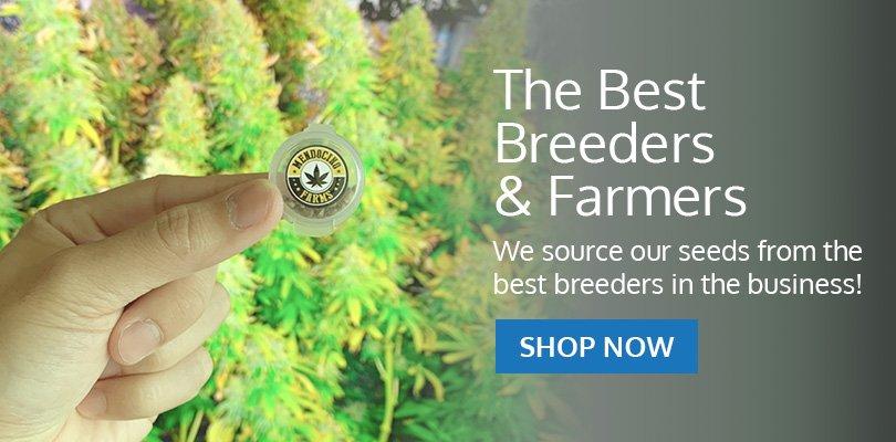 PSB-marijuana-seeds-gulfport-1