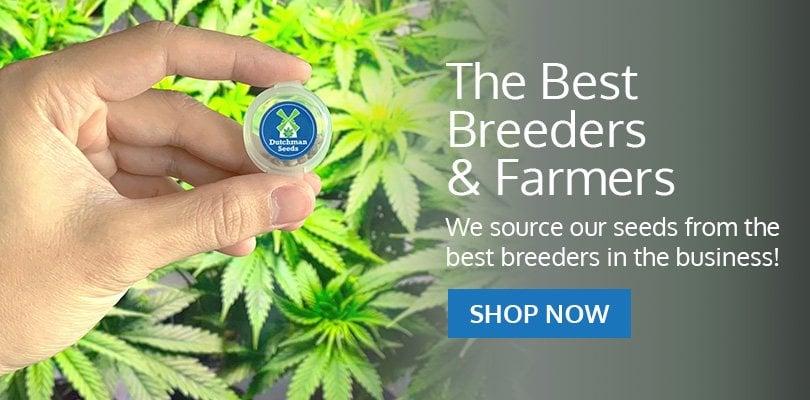 PSB-marijuana-seeds-st-petersburg