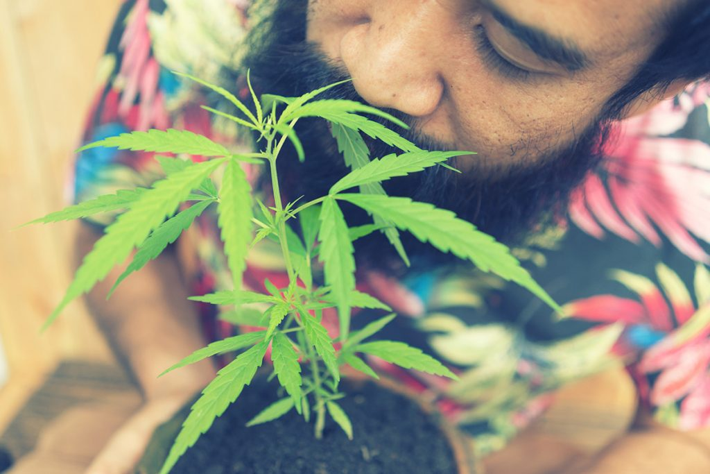 buy-cannabis-seeds-waukegan