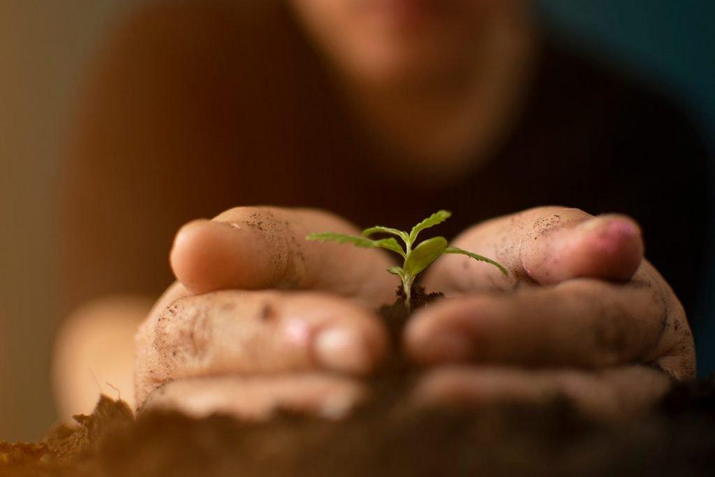 buy-marijuana-seeds-brockton