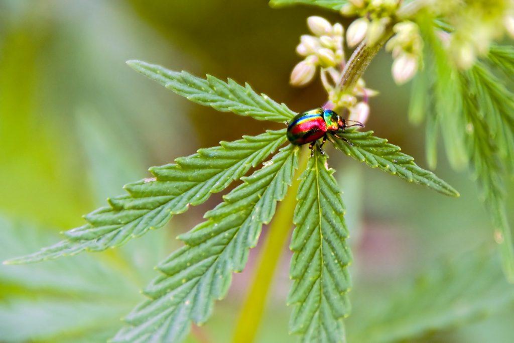 buy-marijuana-seeds-shawnee