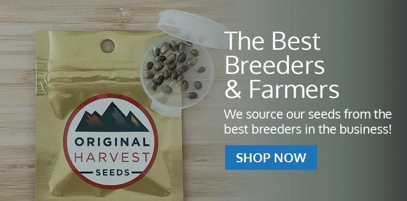 PSB-marijuana-seeds-brookings-1