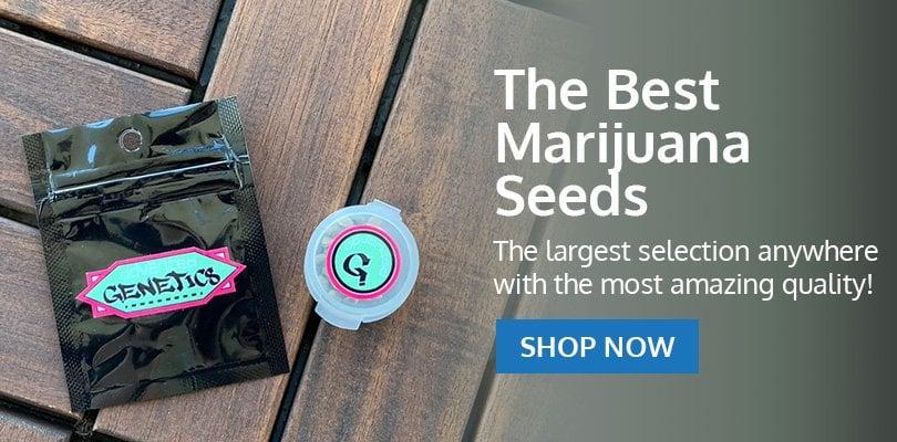 PSB-marijuana-seeds-edmond-2