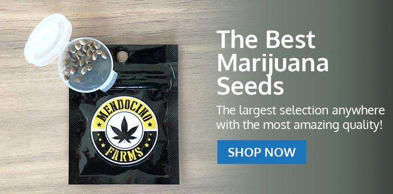 PSB-marijuana-seeds-elizabeth-1