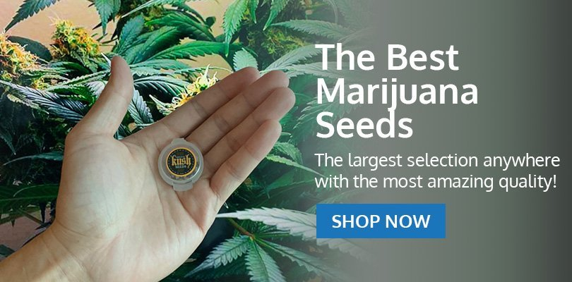 PSB-marijuana-seeds-gresham-2