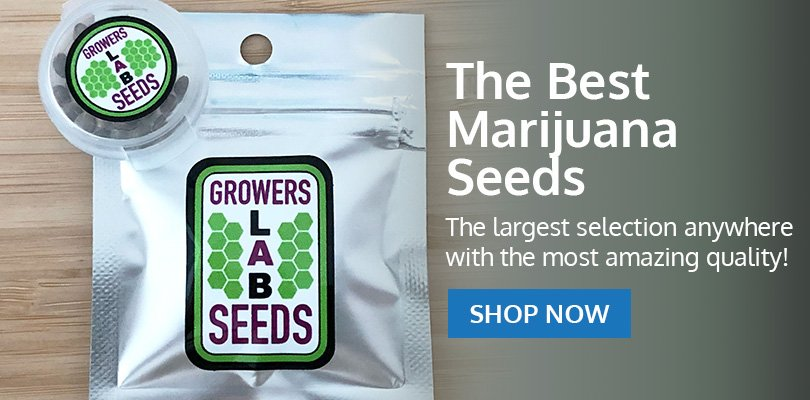 PSB-marijuana-seeds-lee's-summit-1