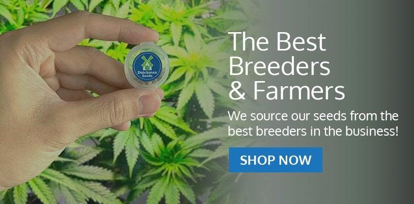 PSB-marijuana-seeds-new-york-city