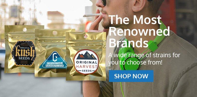PSB-marijuana-seeds-norman-2
