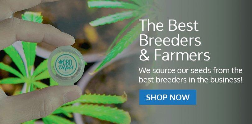 PSB-marijuana-seeds-rio-rancho-1
