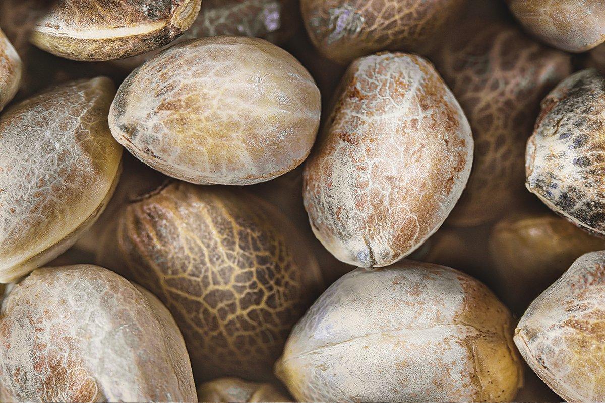 find autoflowering cannabis seeds for sale online