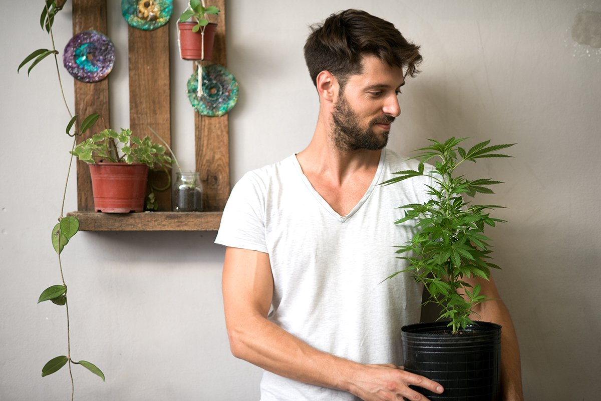 learn to grow with autoflowering cannabis seeds