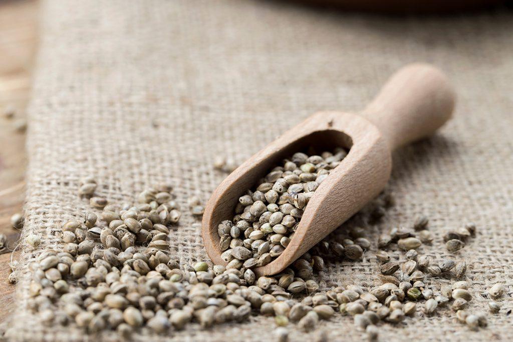 buy-cannabis-seeds-new-york-city