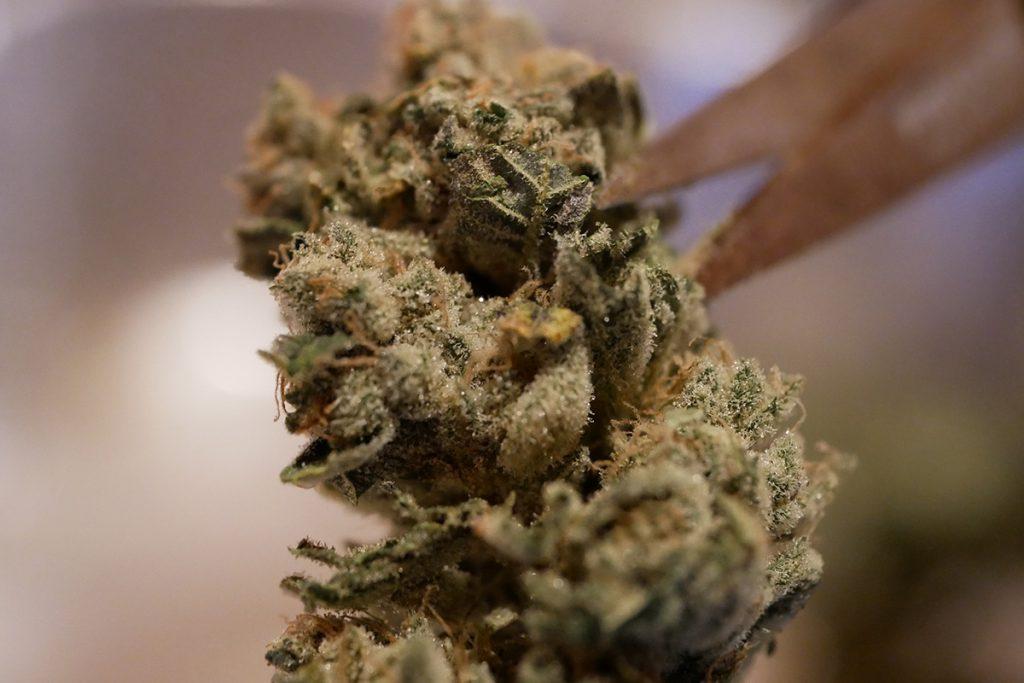 buy-cannabis-seeds-schenectady