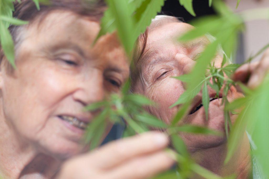 buy-cannabis-seeds-sparks