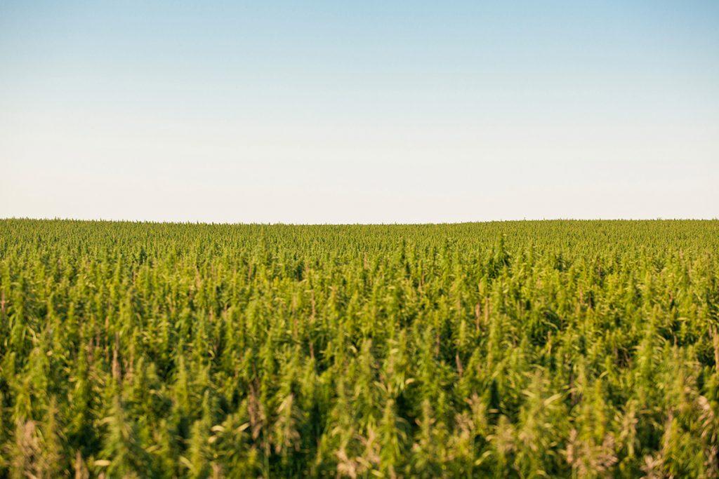 buy-cannabis-seeds-syracuse